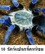 10 อันดับสัตว์แปลกที่คนไทยนิยมเลี้ยงมากที่สุด