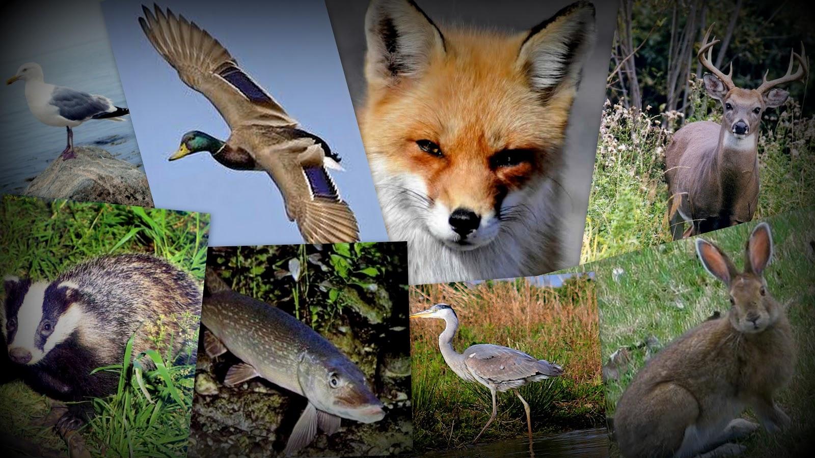 faune-photo