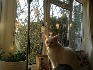 white cat and Christmas lights in the window with sunshine