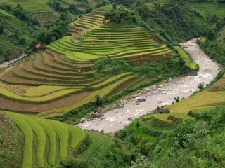 Rice terraces in Sapa (Lao Cai, Vietnam)