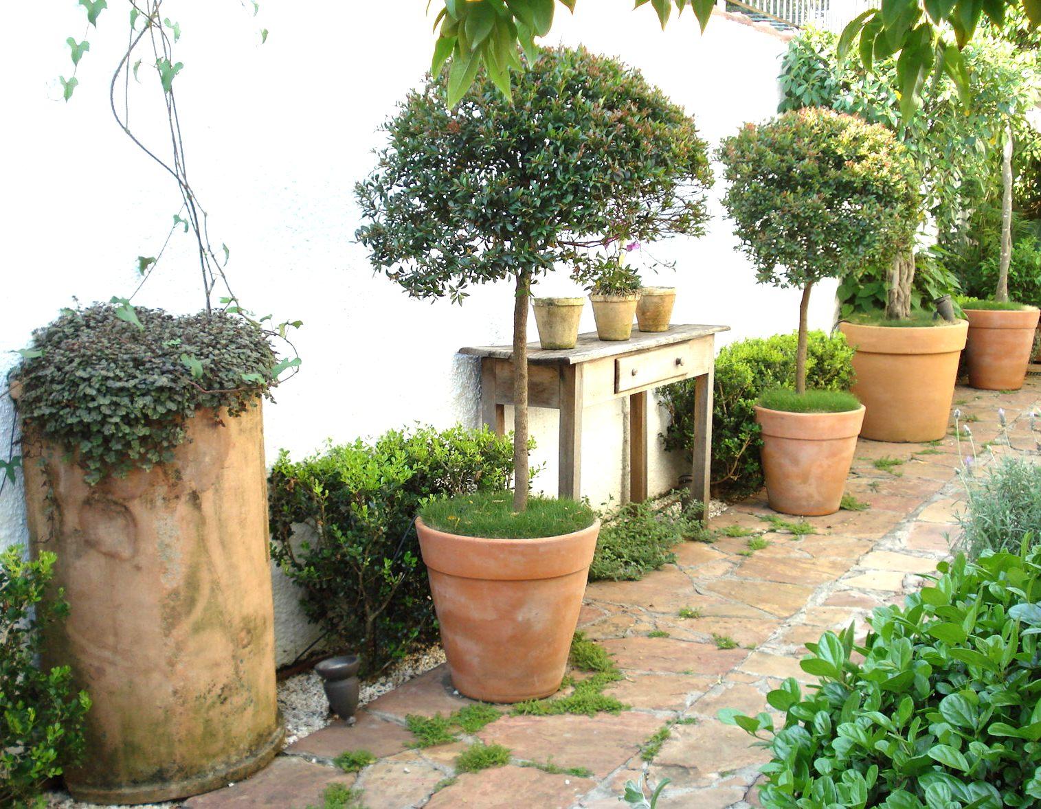 plantas de jardins tipos : plantas de jardins tipos: para dentro de casa um pouco da natureza e a maneira mais usada para