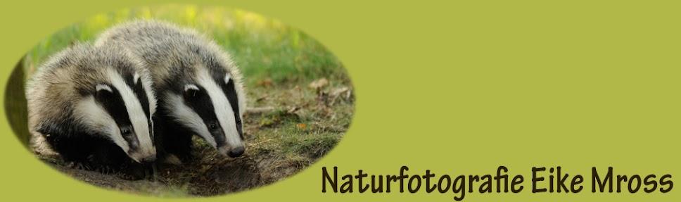naturfoto-mross