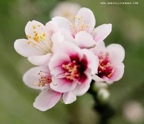 Tem cheirinho de flor!.  A Primavera chegou!
