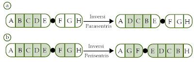 Inversi Kromosom
