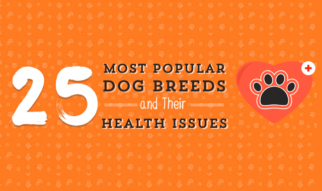 Most Popular Dog Breeds and Their Natural Health Problems