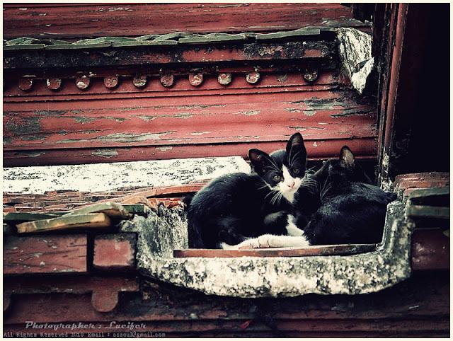 Photograph Cat