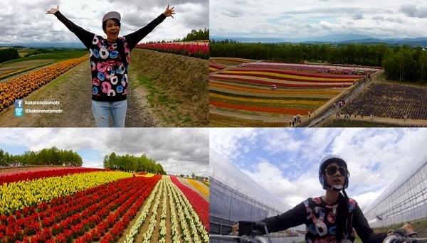 Amanda Zevanya bukit bunga warna-warni di Jepang