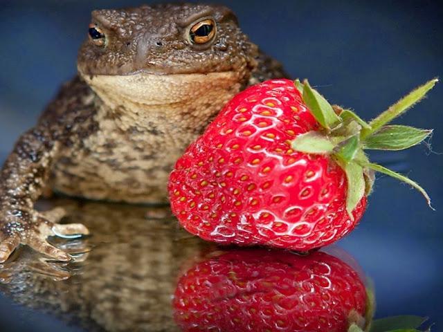 """<img src=""""http://1.bp.blogspot.com/-DOdoQw9EhCI/Uq9gegeOGXI/AAAAAAAAFxQ/PNgRXj-El0k/s1600/j67.jpeg"""" alt=""""Frogs Animal wallpapers"""" />"""