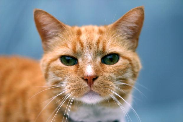 Кто лучше кот или кошка для дома