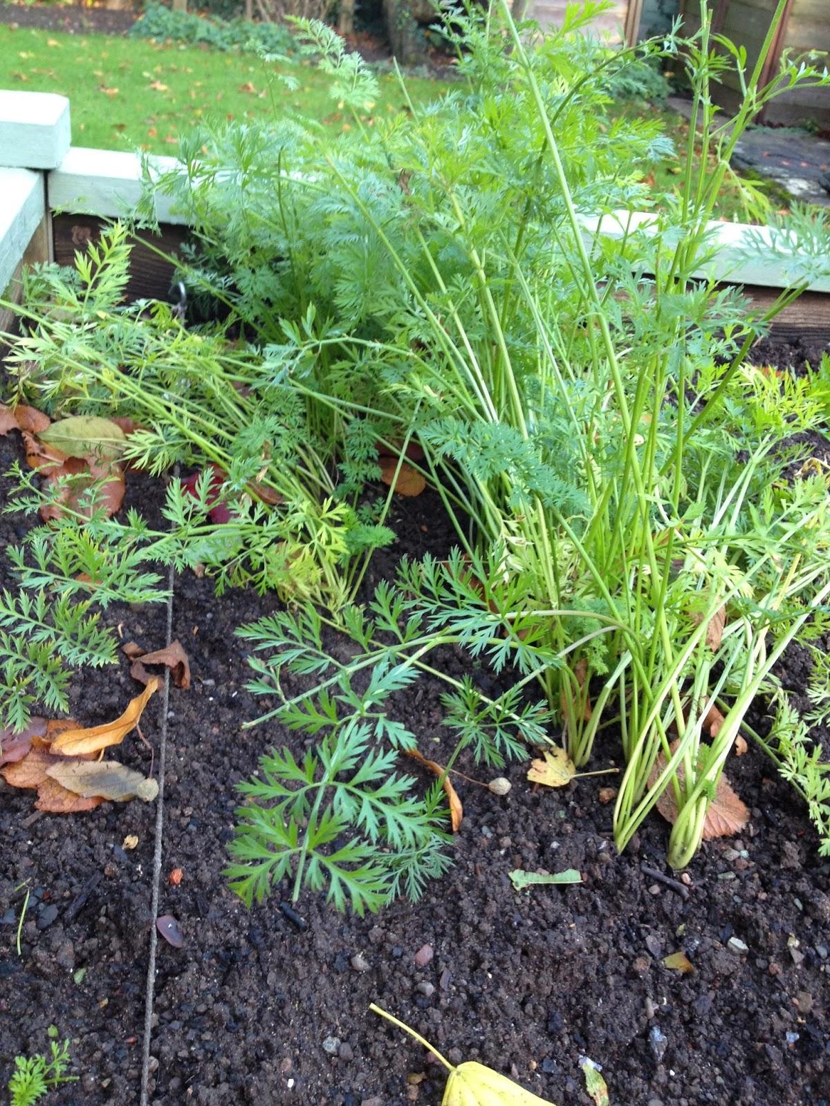 Garden Update November And Squirrel Proof Bulbs Garden