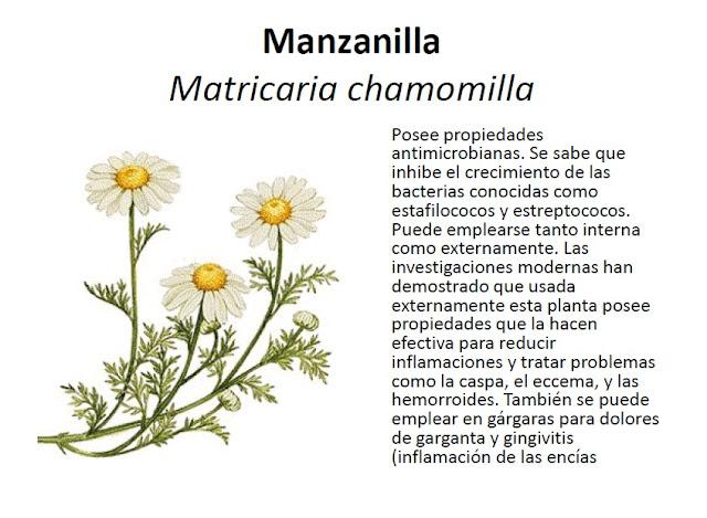 academia citogim algunas plantas medicinales y sus