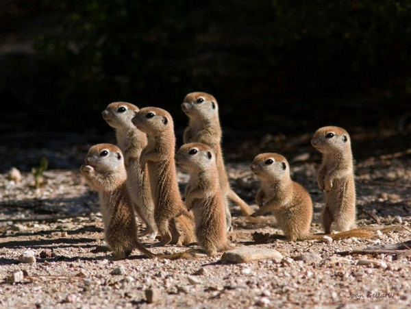 Веселые картинки с участием диких животных