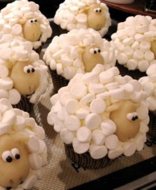 foto: ovejas