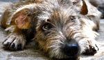 Cercapadrone - Il primo canile online
