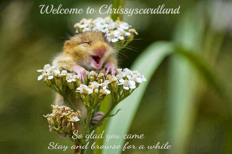 Chrissyscardland
