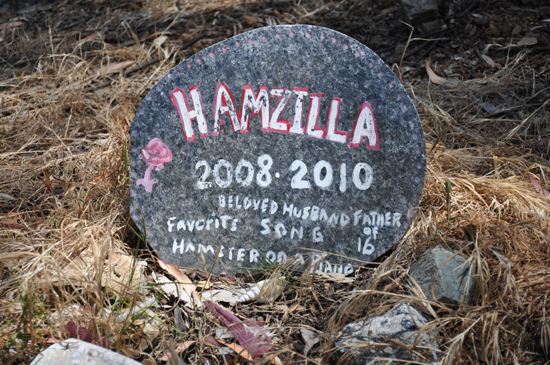 Catalina Island Pet Cemetery