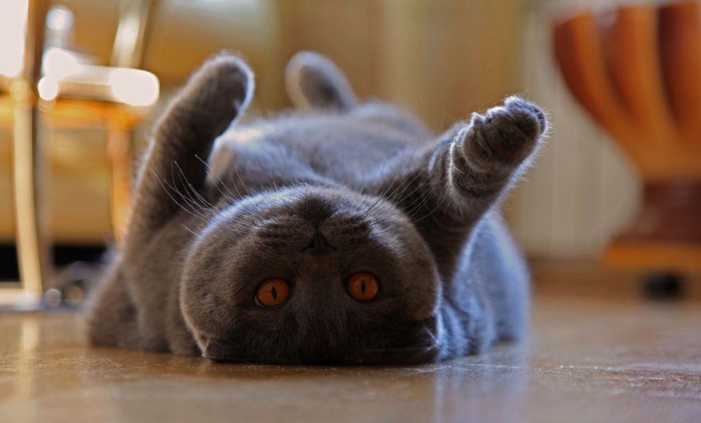 10. Cat's yoga