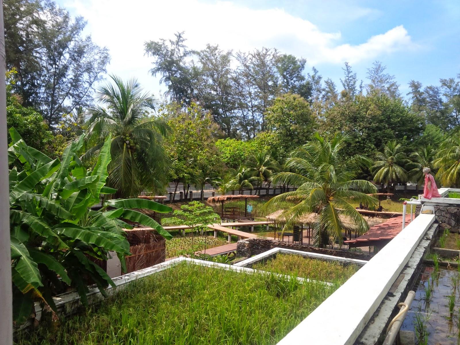 All about Malaysia : Laman Padi Langkawi - Rice Garden Museum Langkawi