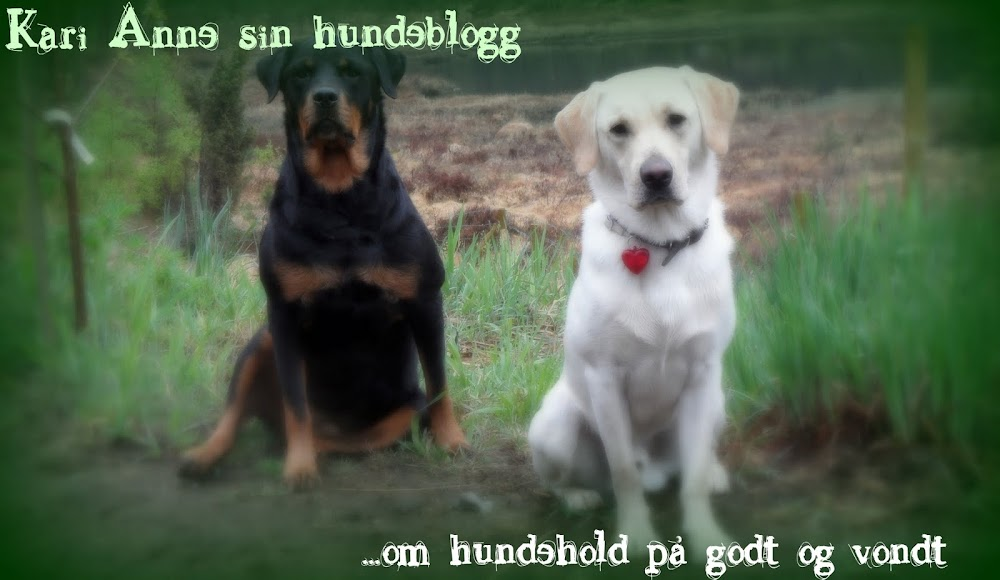 Kari Anne sin hundeblogg