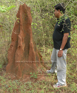 Ant House-5 Feet - Masinagudi Forest