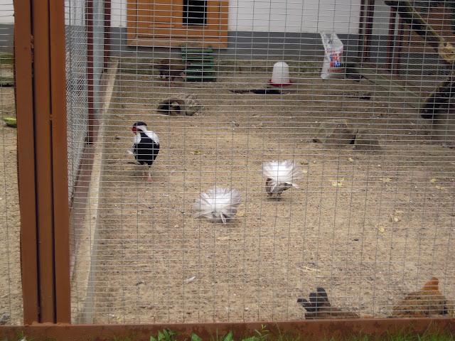 мини зоопарк в донецке: