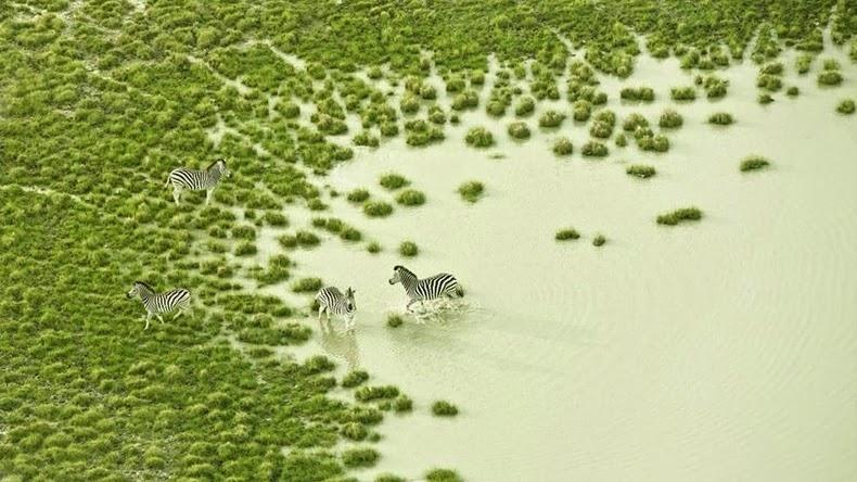 Fotos aéreas de la Vida Silvestre de Botswana por Zack Seckler