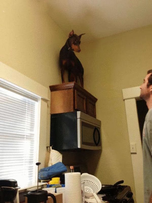 I do not Get Down!