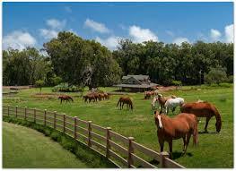 Tempat Pelatihan Kuda