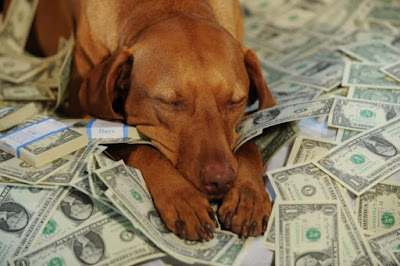 8 curiosidades sobre perros que te sorprenderán