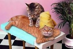 Jag & Cato