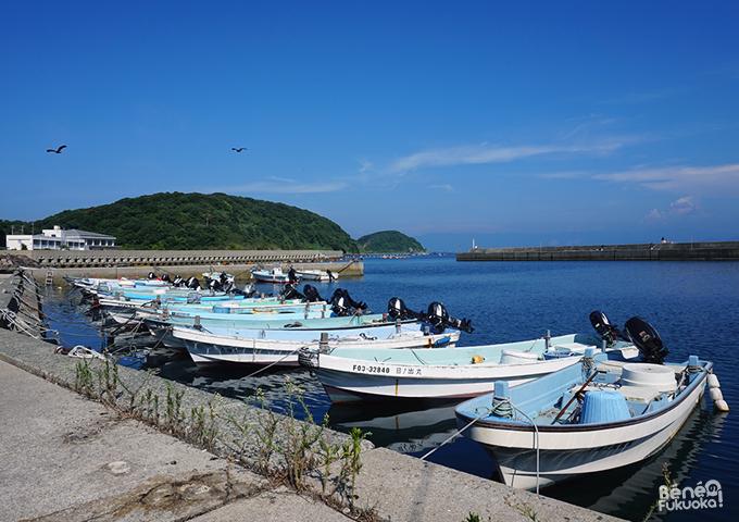 Ainoshima, l'île aux chats