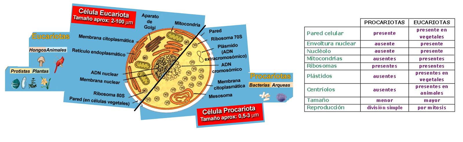 La Célula Desde Una Perspectiva Evolutiva | Biología.