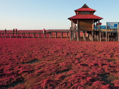Red Seabeach Panjin China
