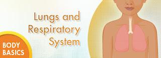 The Respiratory System. 4th grade
