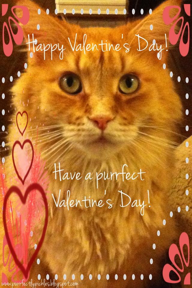 Image result for happy valentines day with cats