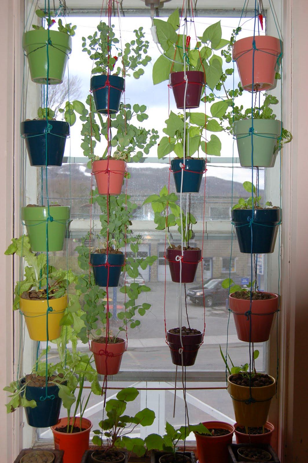 3 jardines en quebec por fin comenzamos - Fines herbes en pot interieur ...