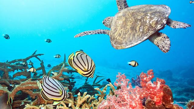 Life aquatic wallpaper