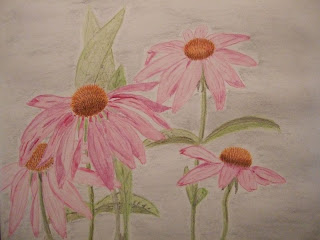 first flower with watercolor pencils - Echinacea