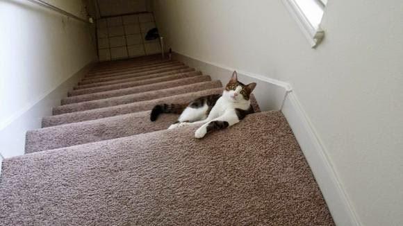 Смешной кот и лестница в доме