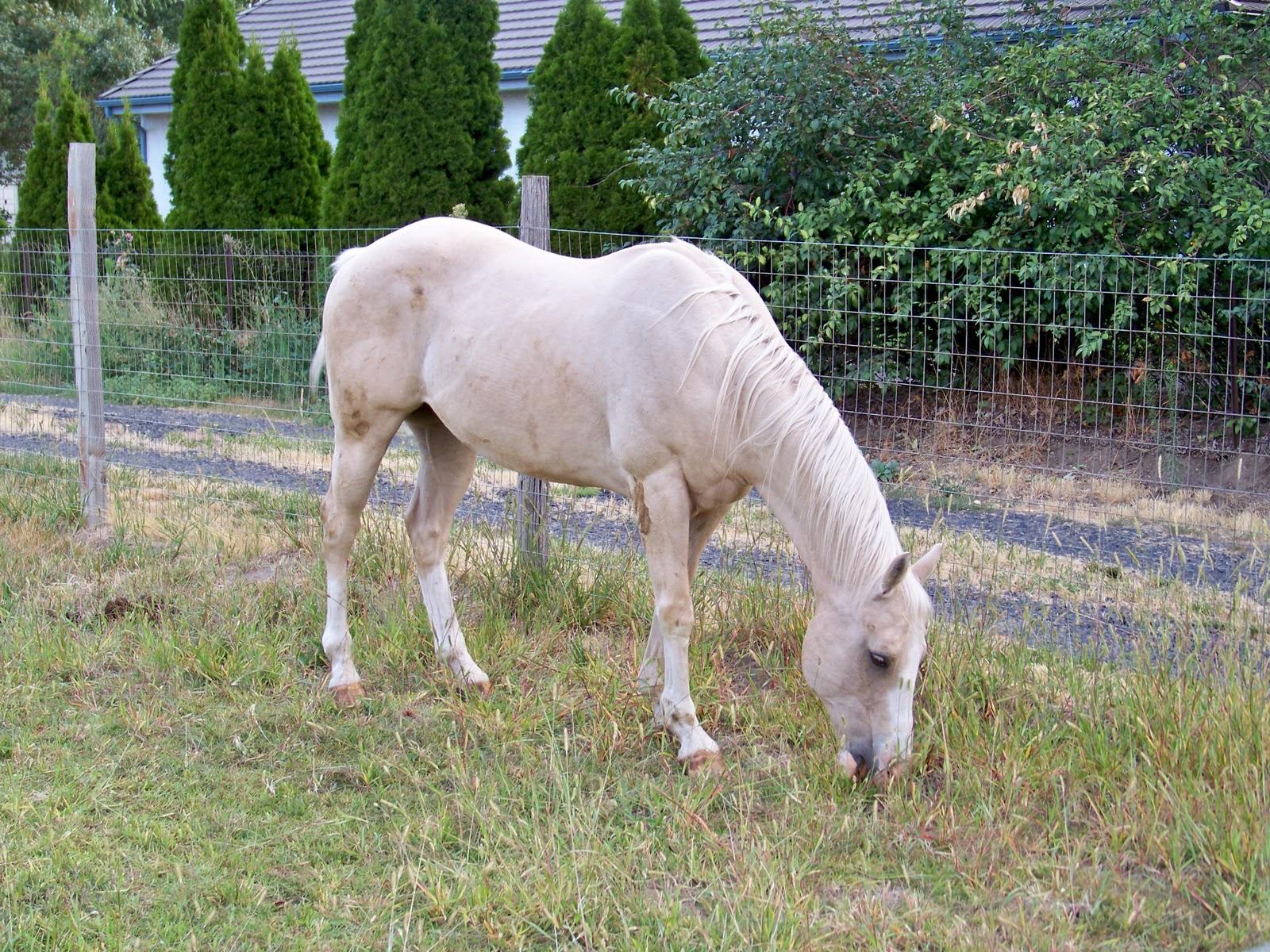 сосед разводит лошадей