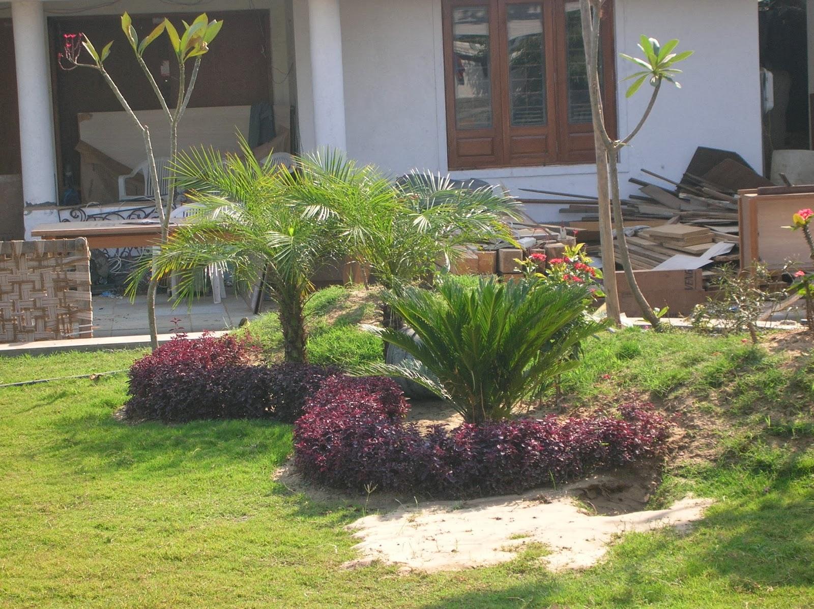 outdoor garden design ahmedabad - Garden Design Services