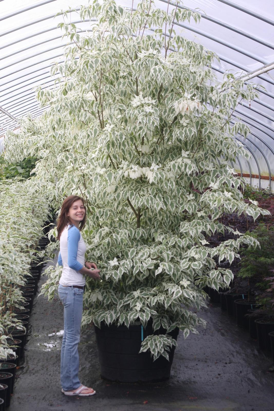 Flora Wonder Blog: Buchholz Plant Introductions