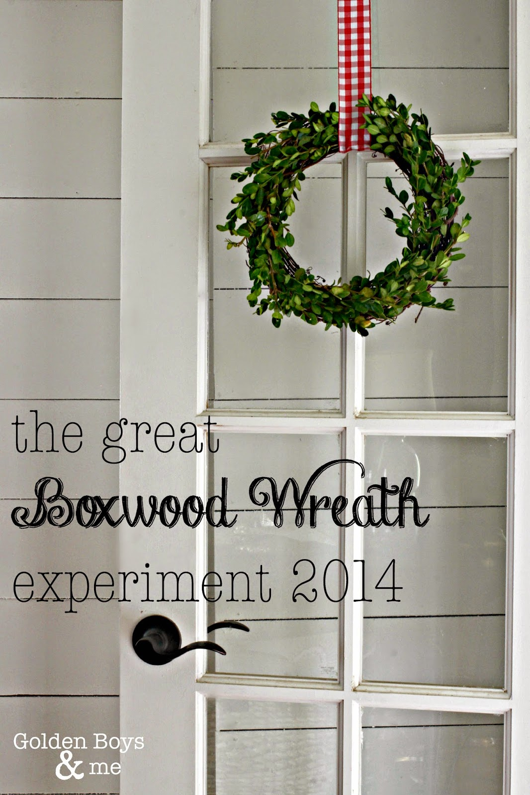 Boxwood wreath made with clippings from a boxwood shrub-www.goldenboysandme.com