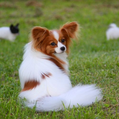 Top 5 Cutest Dog Breeds
