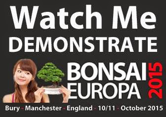Bonsai Europa 2015