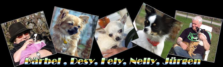 Bärbels Chihuahuas an de Waterkant