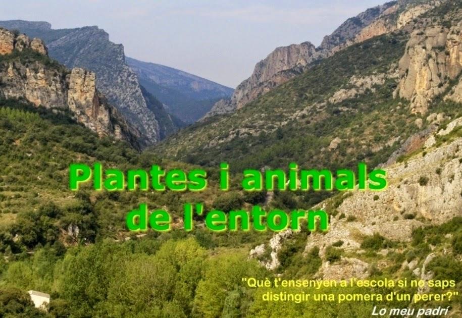 PLANTES I ANIMALS DE L'ENTORN