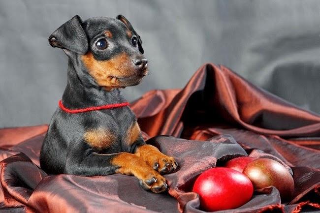 Pies i Święta Wielkanocne