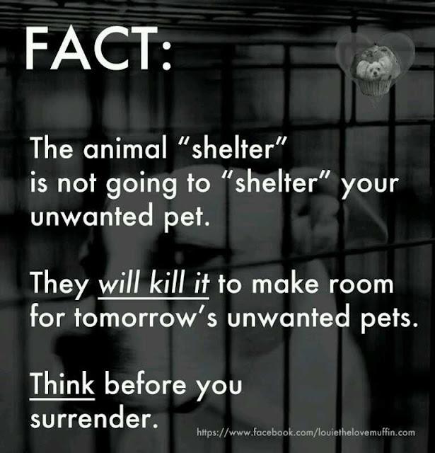 animal shelter fact: