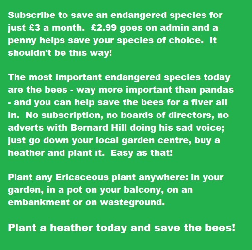 Save the bees, plant a heather.